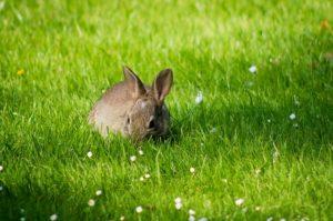 Kleintiere auf dem Rasen